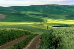 First Light in the Palouse, by Alison Meyer, www.alisonmeyerphotography.com